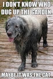 Fail Memes - best of funny dog fail memes daily funny memes