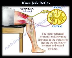 Describe A Reflex Action Knee Jerk Reflex Everything You Need To Know Dr Nabil