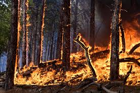 Wild Fires In Canada July 2017 by Lightning Caused Fires On The Rise In The Boreal Forest