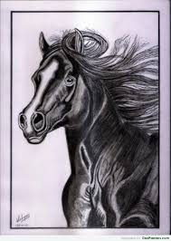 the royal rider realistic pencil sketch of horse desipainters com