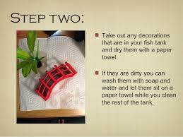 Betta Fish Decorations How To Clean Your Betta Fish Tank