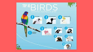 the count is on to learn more about our backyard birds wingham