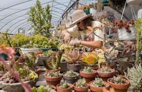 Todd Brickhouse by Maine Grower Finds Soulmates In Succulents Made In Maine