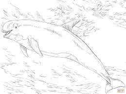 risso u0027s dolphin coloring page free printable coloring pages
