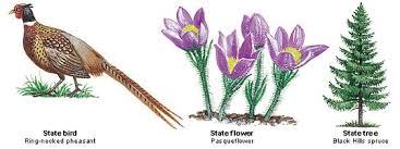 state bird of south dakota south dakota state bird flower and tree united states