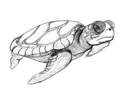 sea turtle coloring pages free printable turtle coloring pages