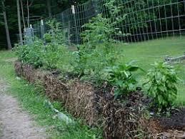 strawbale gardening
