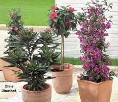 balkon und terrassenpflanzen aldi süd balkon und terrassen pflanzen