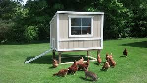 green city growers urban farming backyard chicken coops