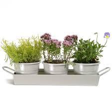 herb pots for windowsill ckb ltd windowsill pots and tray herb planter gift set