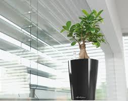 Vasi Da Interni Design by Il Verde In Casa Dedi Network
