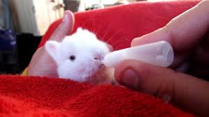 me hand feeding one of our baby bunny rabbits youtube