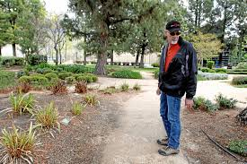 native plants at csu dominguez cal state university playing a critical role in water conservation