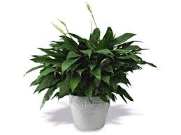 best house plants houseplants and air care reader s digest