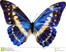 butterfly stock photos royalty free images