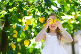 meyer lemon tree for sale the planting tree