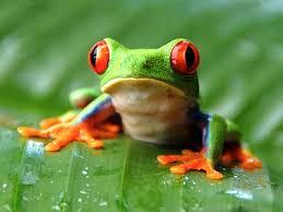 tree frog jigsaw puzzle jigzone com