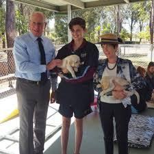 How Do Blind Dogs Know Where To Go Guide Dogs Nsw Act