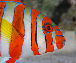 the physiology of coloration in fishes reefs