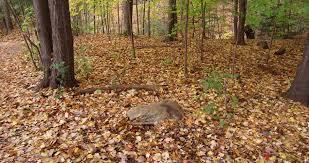 gardener rake dry autumn maple tree leaves pile ir house