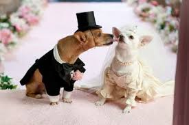 dog wedding dress all list of different dogs breeds wedding dresses for dogs