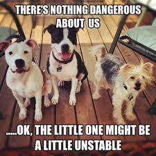 This Is Dog Meme - theres nothing dangerous about us dog meme meme collection