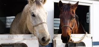 How To Tell If A Horse Is Blind Horse Slaughter Aspca
