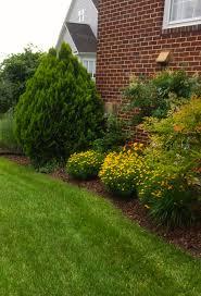 Hues Of Yellow Lisa Earthgirl U2013 Gardening Tips And Helpful Advice Shade Plants