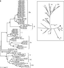 phylogenetic diversity among low virulence newcastle disease