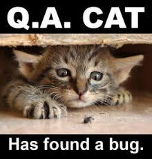 Qa Memes - qa cat has found a bug album on imgur