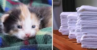 imagenes de animales y cosas 12 cosas que tienes sin usar y que los refugios de animales necesitan