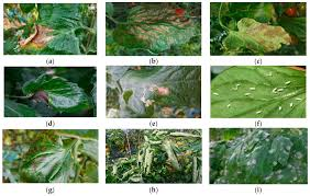Plant Pests And Diseases - sensors free full text a robust deep learning based detector