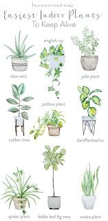 best plants for bedroom infographic low maintenance house plants that purify the air best