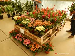 Frugal Flowers - open houses of gorgeous plants and flowers frugal farm gals