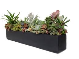 succulent arrangement concrete centerpiece 24