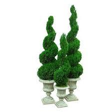preserved spiral topiary spi020 fga