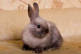 rabbit bunny can rabbits walk on a leash petfinder