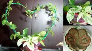 Home Plant Decor by Living Wreath With Money Plant Pothos Home Decor Ideas Youtube