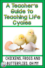 a teacher u0027s guide to teaching life cycles frogs butterflies and
