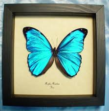 butterfly gifts 14 best butterfly gifts images on butterfly gifts