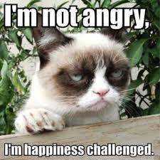 Mad Kitty Meme - 110 lovely cat memes