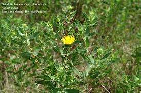 louisiana native plants tracking list and fact sheets louisiana department of wildlife