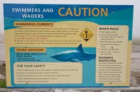 shark alert u2013 photo book