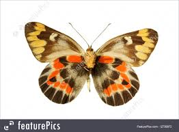 wildlife colorful butterfly stock picture i2739972 at featurepics