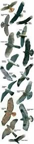 173 best birds images on pinterest poultry birdwatching and animals