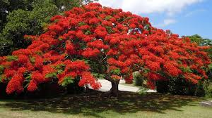 Bermuda Botanical Gardens Bermuda Botanical Gardens A Treat For All Visitors To The