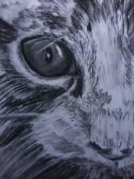 animal drawing feeling