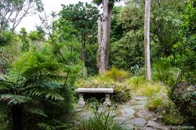 native new zealand plants fernglen native plant gardens is a great collection of new zealand