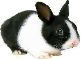 Cute Black And White Wallpapers by Cute Black Bunny Hd Wallpaper 33 Background Hdblackwallpaper Com