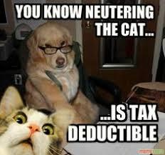 Advice Dog Meme Generator - advice animal meme creator we love animals pinterest meme